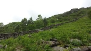 Wooded hillside NFP